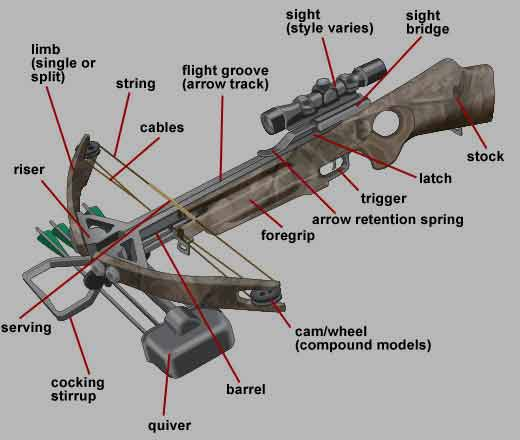 Using Bows Is Unique To The Crossbow