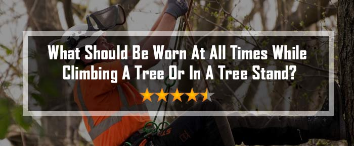 What Should Be Worn At All Times While Climbing A Tree Or In A Tree Stand?