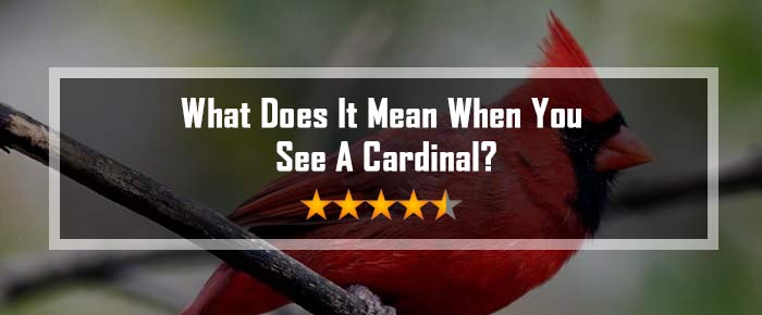 what does it mean when you see a cardinal